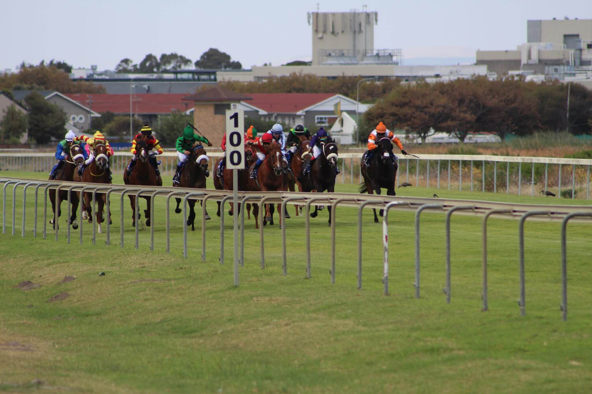 Horses For Causes - A Premier Race Day